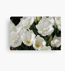 Snow White Tulips Canvas Print