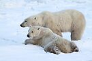 Polar Bear Mates by Carole-Anne