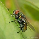 Wet Fly by Rick Playle