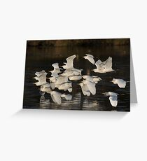To Roost They Go Greeting Card
