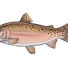 Cutthroat Trout.  by Eugenia Hauss