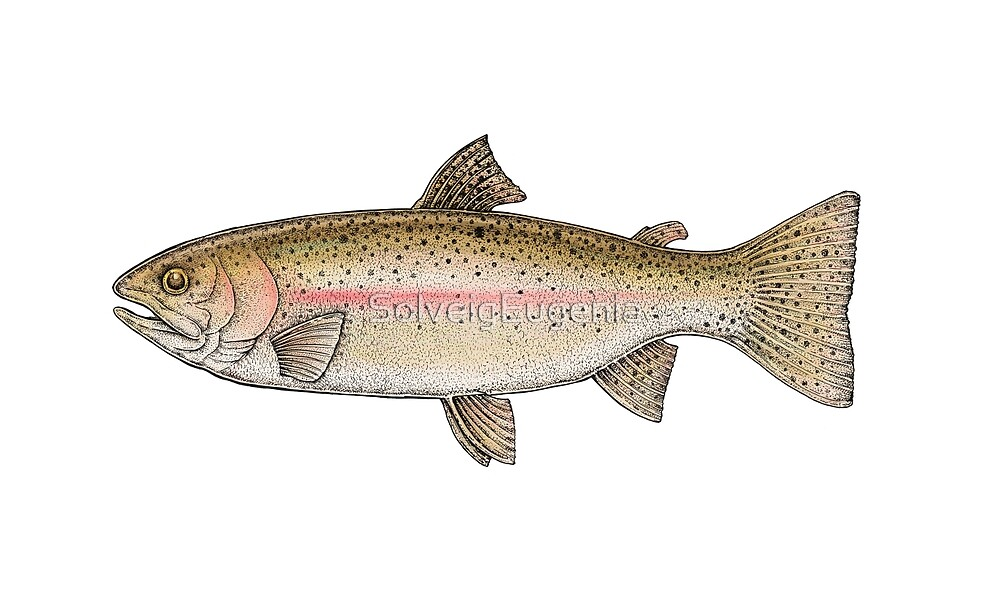 Rainbow Trout by Eugenia Hauss