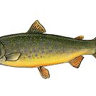 Arctic Char by Eugenia Hauss