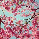 spring sky by RichCaspian