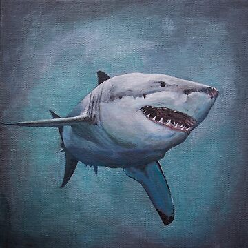 Great White Shark by afletcher