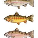 Trout Collection by Eugenia Hauss