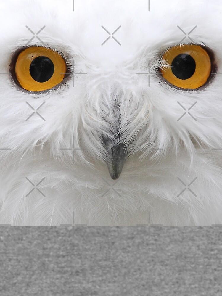Snowy Eyes - Snowy Owl by darby8