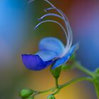 delicate beauty by Manon Boily