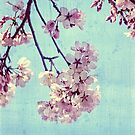 Grunge Pale Pink Sakura Vintage Cherry Blossoms  by Beverly Claire Kaiya