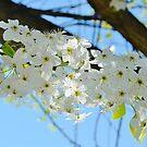 Splendor in Springtime by Scott Mitchell