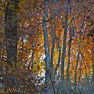 Colorful Essence . Autumn. Galicia. by Andrzej Goszcz. by © Andrzej Goszcz,M.D. Ph.D