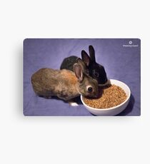 Rabbits Eating Spent Grains Canvas Print