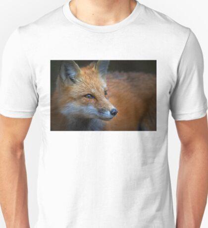 Algonquin Fox, Algonquin Park, Canada T-Shirt