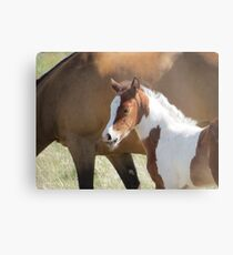 Hi...I Already Have Wiskers!! Metal Print