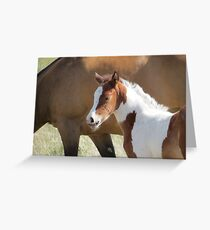 Hi...I Already Have Wiskers!! Greeting Card