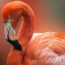 ....Flamingo .. a Royal bird .... by John44