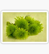 Green Spider Chrysanthemums Sticker