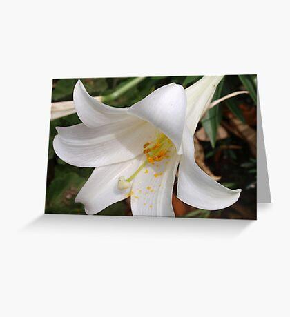 Oh, Lily. do you toil? Greeting Card