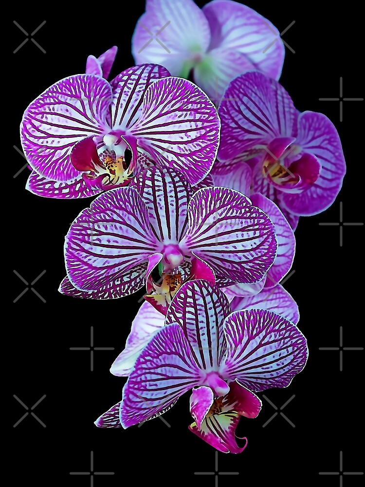 Purple Veined Orchid by Focal-Art