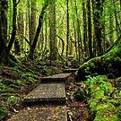 Rainforest Path by Claire Walsh