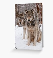 Timber Wolf Pair Greeting Card