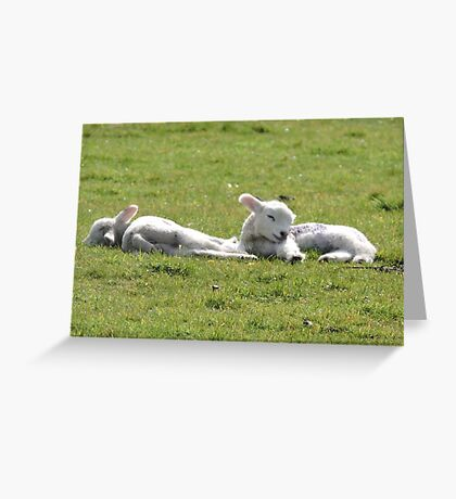It's Tiring Being A Cute Lamb Greeting Card