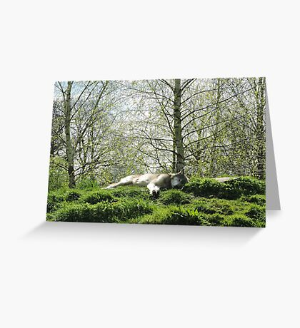 Dreaming Of Paradise Greeting Card