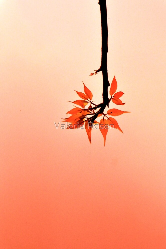 Drop-down Menu by Valerie Rosen