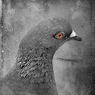 A Bird in the Hand by Scott Mitchell