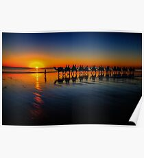 Cable Beach Camels Poster