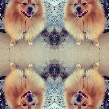 Pomeranian by meldk