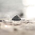 A Little Grey Seashell by Evelyn Flint