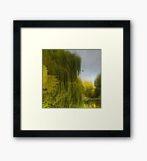 Reflected Willow Framed Print