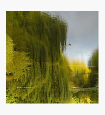 Reflected Willow Photographic Print