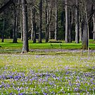 Spring in the park by Erwin G. Kotzab