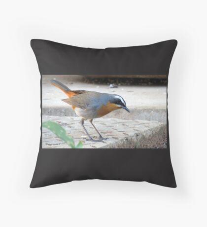 Cape robin Throw Pillow