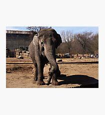 asia elephant Photographic Print