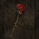 Blood Rose 2 by robevans