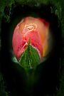 Heart of Darkness - Rosebud by MotherNature