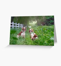 Resting Welshies...... Greeting Card