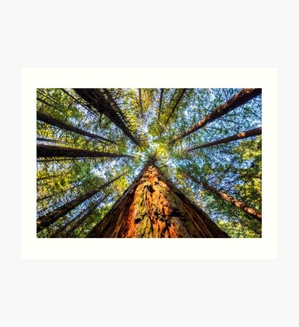Redwood Heaven Reach Art Print