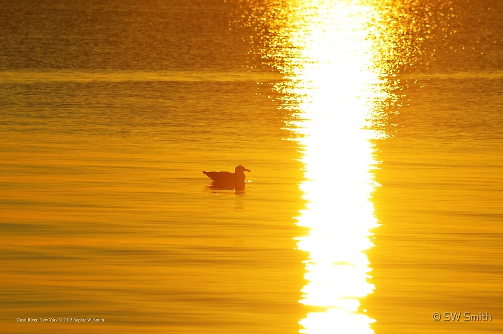 Seagull Floating Towards The Sun's Glitter | Great River, New York by © Sophie W. Smith