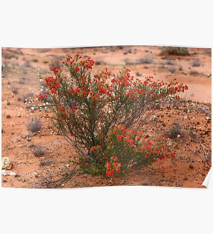 Red Wildflower Poster