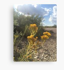 yellow desert flowers Canvas Print