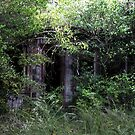 Secret Entrance by Okeesworld