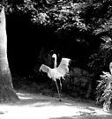 tanzender Flamingo von Marianna Tankelevich