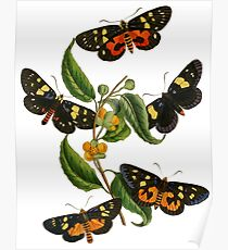 FF - Butterfly-2 Poster