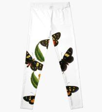 FF - Butterfly-2 Leggings
