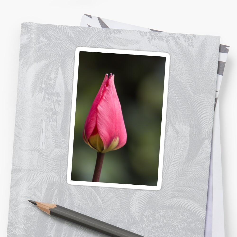 Pink tulip flower Sticker