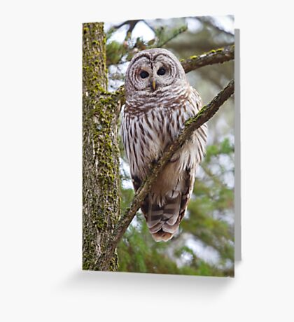 Who, Who, Who cooks for you? Barred Owl Greeting Card